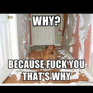 why dog